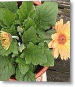 Smiling Orange Zerbera Flower Metal Print
