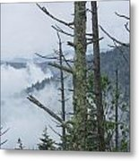 Smokey Mountain Forest No.612 Metal Print