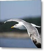 Smooth Sailing Metal Print