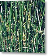 Snake Grass On The Beach Metal Print