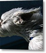 Sniffing Down The Highway Metal Print