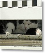 Snoozing On The Porch Metal Print