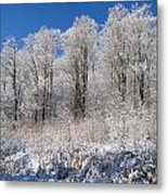 Snow Covered Maple Trees Iron Hill Metal Print