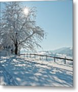 Snow Covered Tree With Sun Shining Through It Metal Print by © Peter Boehi