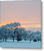 Snow Covered Trees At Sunset Metal Print by Nancy Newell