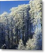 Snow Covered Trees In A Forest, County Metal Print