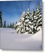 Snow Covered Trees In The Oregon Metal Print by Natural Selection Craig Tuttle