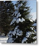 Snow Crusted Evergreen Metal Print