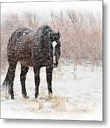 Snow Horse Metal Print