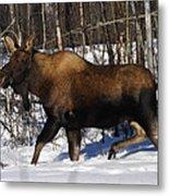 Snow Moose Metal Print