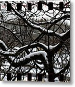 Snow On Branches Metal Print
