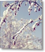Snow On Spring Blossom Branches Metal Print
