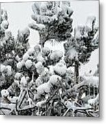 Snow On The Pines Metal Print
