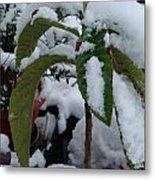 Snow Plant Metal Print