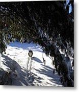 Snow Trail-under The Boughs Metal Print