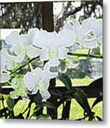 Snow White Orchid On The Water Accented Fx  Metal Print