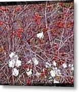 Snowberries And Rosehips Metal Print