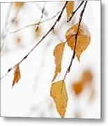 Snowing In Autumn Metal Print