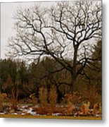 Snowless Winter Metal Print