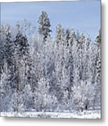 Snows Hit Again In Early Spring Metal Print