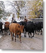 Snowy Cattle Drive Metal Print