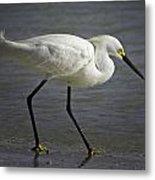 Snowy Egret By The Lagoon Metal Print