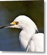 Snowy Egret Close Up Metal Print