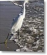 Snowy Egret Walking Metal Print