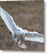 Snowy Flight Metal Print