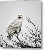 Snowy Owl In A Tree Metal Print