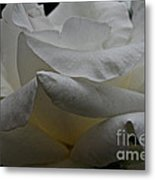 Snowy Rose Metal Print
