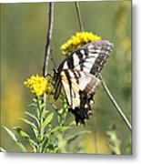 So Fragile - Butterfly Metal Print