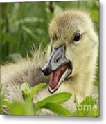 So Much To Say So Little Time For A Gosling Metal Print