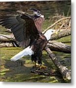 Soaring Eagle Metal Print