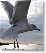 Soaring Gull Metal Print