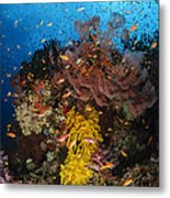 Soft Coral And Sea Fan, Fiji Metal Print