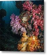 Soft Coral And Sunburst In Raja Ampat Metal Print