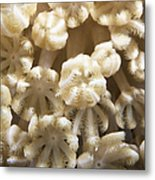Soft Coral Polyps Feeding, Papua New Metal Print