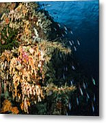 Soft Coral Seascape And Rainbow Metal Print