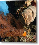 Soft Coral Seascape, Indonesia Metal Print