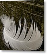 Soft Curve One Metal Print