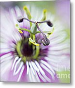 Soft Passion Metal Print