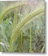 Soft Rain On Grass Metal Print