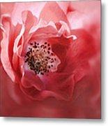 Soft Rose In Square Format Metal Print