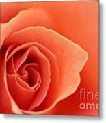 Soft Rose Petals Metal Print