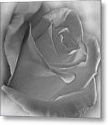 Soft White Rose Metal Print