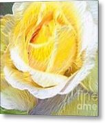 Softly Blooming Rose Metal Print