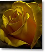Softly Lit Metal Print