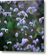 Softly Spoken Metal Print