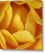 Softness In Yellows Metal Print